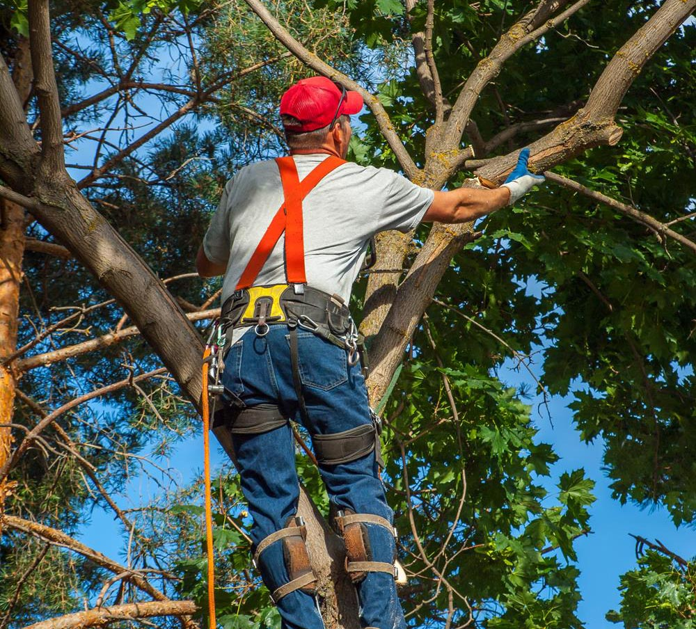 Cheap Tree Service In The Bronx