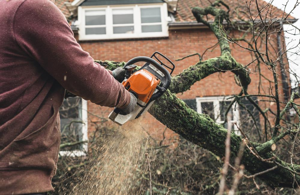 Bronx tree cutting service near me