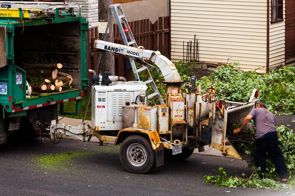Bronx tree removal service near me